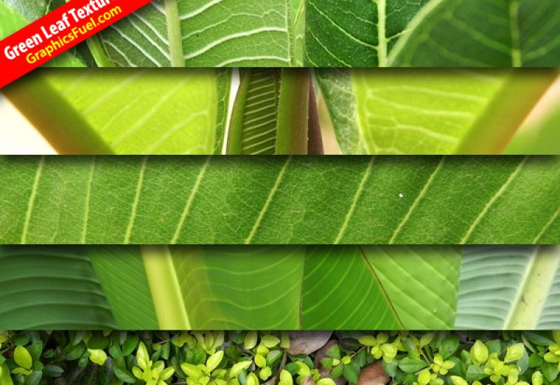 green-leaf-textures